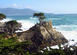 Lone Cypress, Monterey