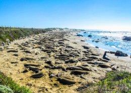 Piedra Blancas beach, Big Sur